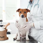 Xylit - die unbekannte Gefahr für Hunde