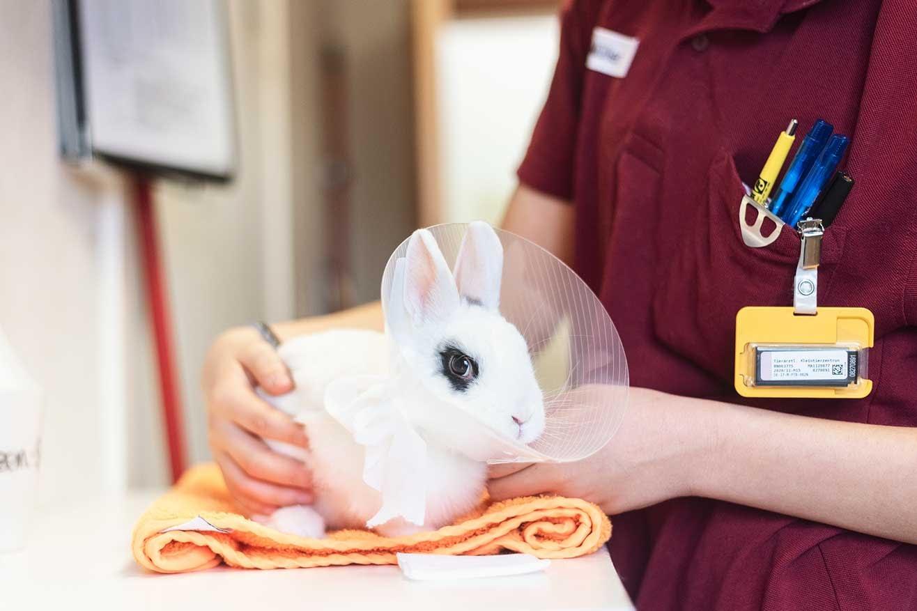 Kaninchen - Tieraerztliches Kleintierzentrum Hanauerland