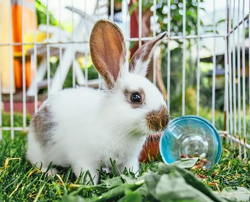 Artgerechte Kaninchenhaltung: Alle Infos und Tipps